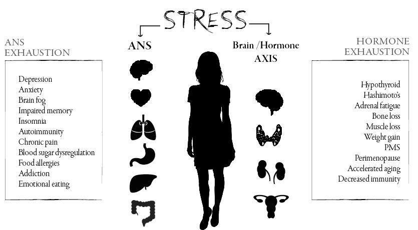stress rewire